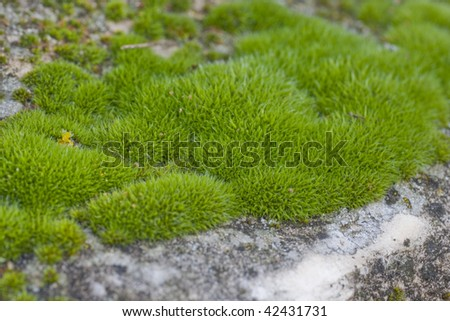 Moss texture in macro photography