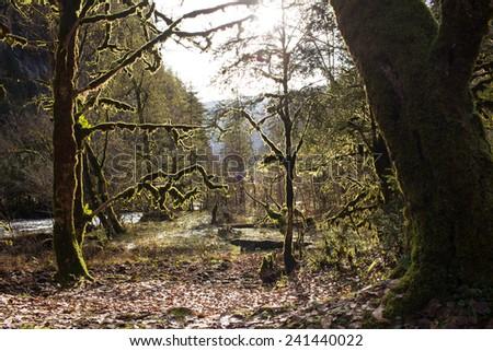 Moss Tree in Mountain George - stock photo