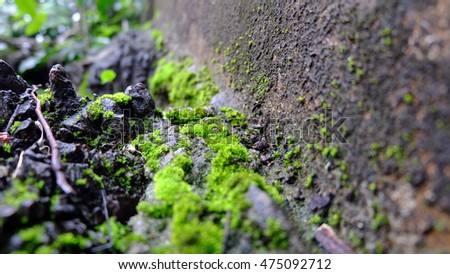 Moss tree on the mountain