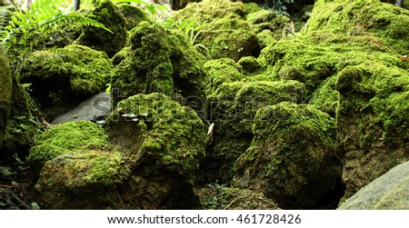 moss / tropical rain forest