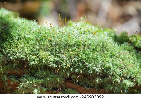 moss with sun light in forest  - stock photo