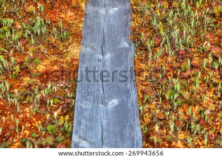 Mosses and lichens and wooden path on swamp in Finland - stock photo
