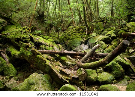 Mossy boulders in rain forest, Yakushima Island, Japan