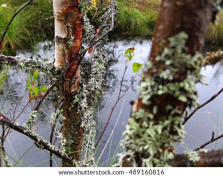 Mossy branches with lake background