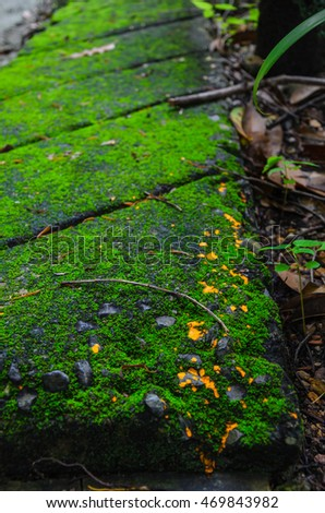 Mossy brick and tiny cutey oragne dots look so wounderful and powerful