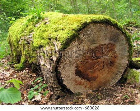 Mossy log - stock photo