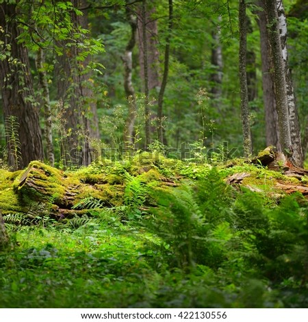 Mossy log in a green summer forest