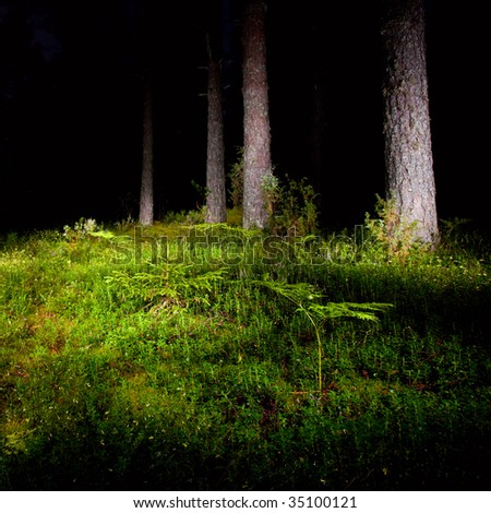 Mossy meadow with fern at night pinewood - stock photo