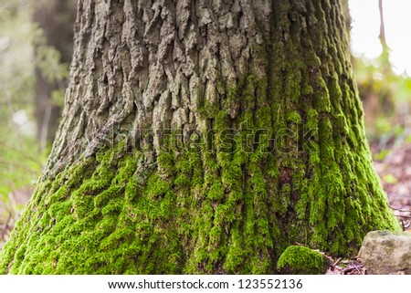 Mossy trunk of a tree - stock photo