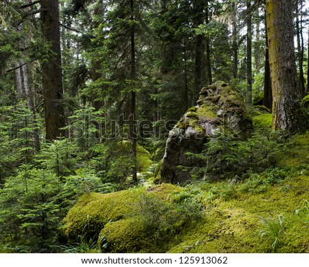 Mossy undergrowth in mountain forest - stock photo