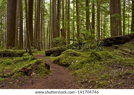 Mossy US Pacific Northwest Rainforest. Northern Oregon State Nature. Forests Photography Collection.