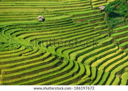 Most Beautiful Rice Terrace in Tule , Mu Cang Chai, Vietnam