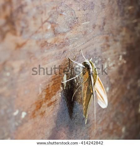 moth - stock photo