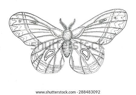 Moth butterfly watercolor illustration - stock photo