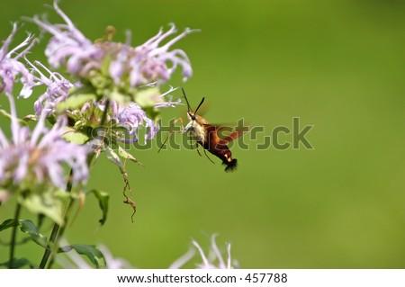 Moth III - stock photo