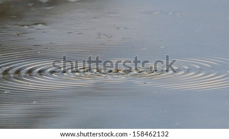 Moth Water Ripples - Nature Backgrounds of Interesting Beauty - Motion of Wonderful Earth
