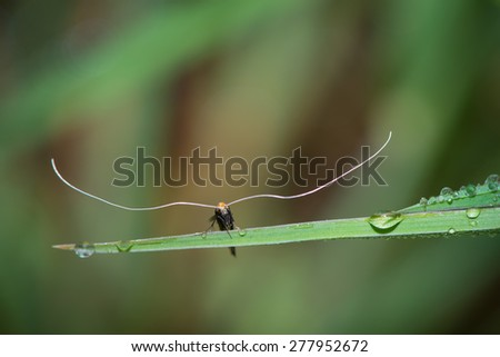 Moth with large antennas resting on the grass in the garden - stock photo