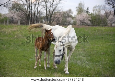 Mother and baby equine horse snuggling - stock photo