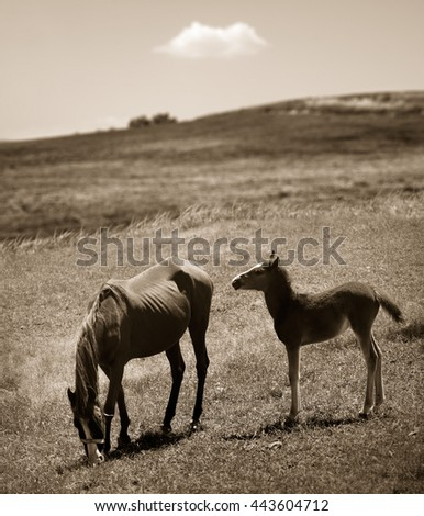 mother and baby horse in a field. - stock photo