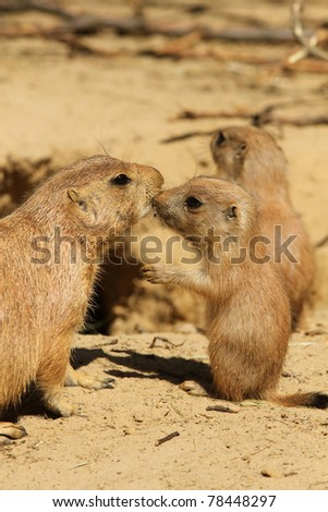 Mother and baby prairie dog kissing - stock photo