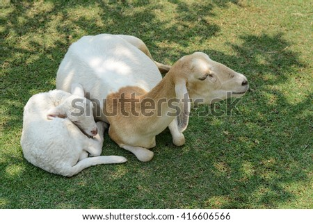 Mother and baby sheep - stock photo