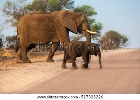 Mother and child elephants crossing the road