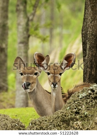 Mother and Cub Gazelles - stock photo