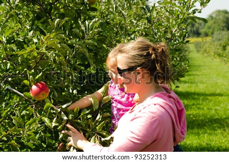 Mother and daughter in orchard picking apples in orchard. - stock photo