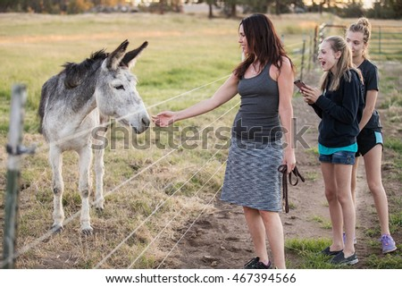 Mother and daughters visiting a donkey at a farm