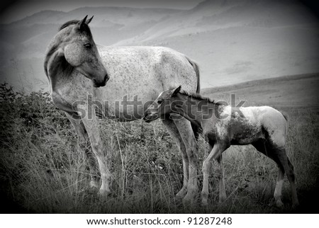 Mother and Foal in black and white - stock photo