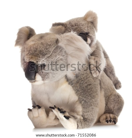mother and young koalabear on white background - stock photo