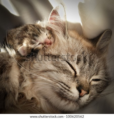 Mother cat and her kitten - stock photo