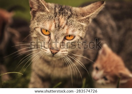 mother cat and its little cub in the grass, outdoor picture - stock photo