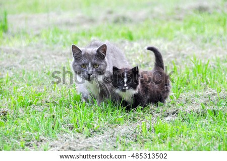 Mother cat and kitten on green grass