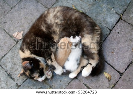 Mother cat feeding two kittens - stock photo