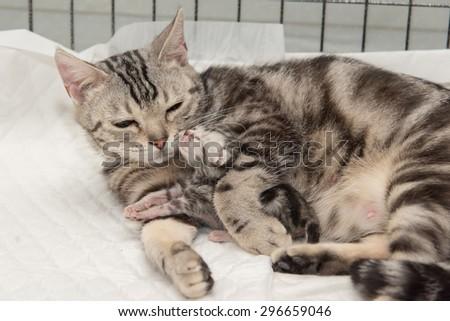 mother cat hugging little kitten in veterinarian clinic - stock photo