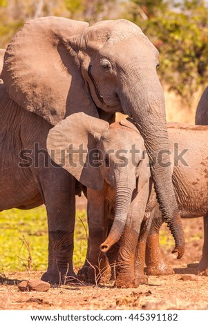 Mother elephant protecting her baby - stock photo