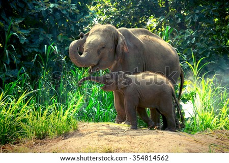 Mother elephant with baby - stock photo