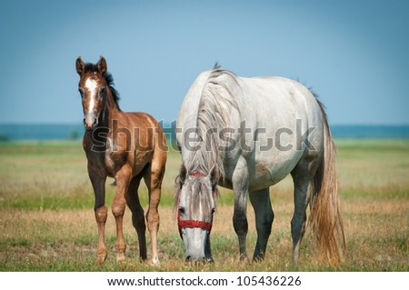 Mother horse and her little foal