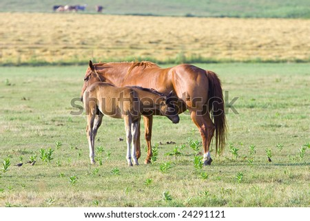 Mother horse with foal in meadow