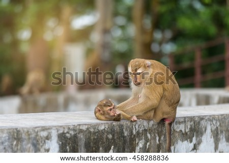 Mother monkey and baby monkey are playing in park of Thailand, Image filter effect.