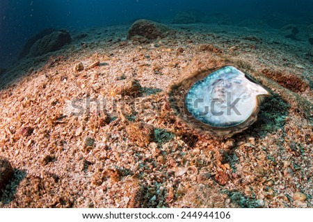 Mother of pearls shell in a reef colorful underwater landscape background - stock photo