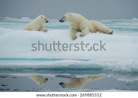 Mother polar bear with her cub look at each other while resting on ice floe in Arctic Ocean above Svalbard - stock photo