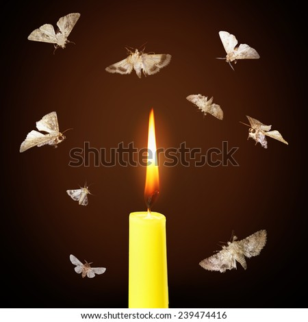 Moths and candle burning light - stock photo