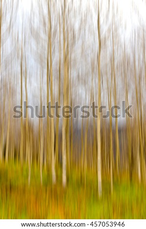 Motion blurred trees. Natural forest background with panning motion. Abstract autumn landscape.