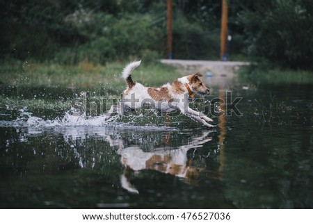 motion picture of fox-terrier enjoying water