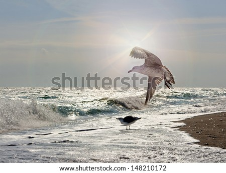Motley seagull flight at sunset sky in a sea flow line - stock photo