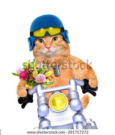 motorcycle cat - stock photo