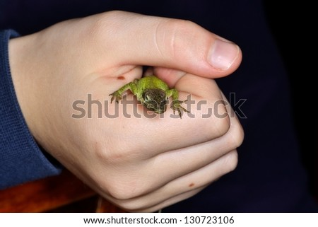 Mottled green anole in child hand caught - stock photo