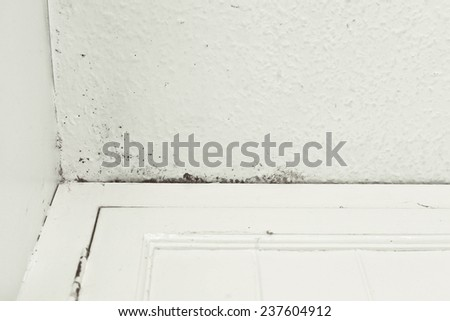 Mould on a ceiling due to damp - stock photo
